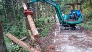 ▲森林から間伐材が伐採される様子