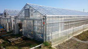 ▲静電気により虫を除去するシステムを導入した温室