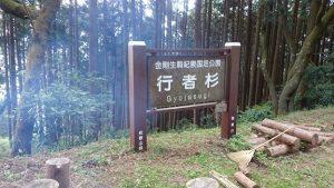 ▲金剛生駒紀泉国定公園内にある「行者杉」