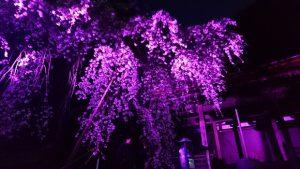 ▲落慶祭でライトアップされた五佛堂