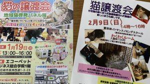 ▲定期的に開催されている「猫譲渡会」