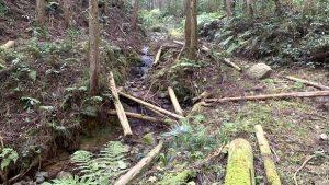 ▲大雨により大量の流木が散乱している太井地区の森林